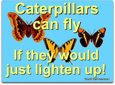 Caterpillars can fly SJS sm