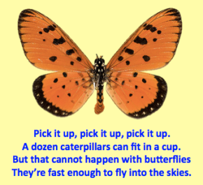 butterfly poem on improvement
