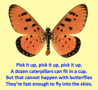 Butterfly Pick it Up poem